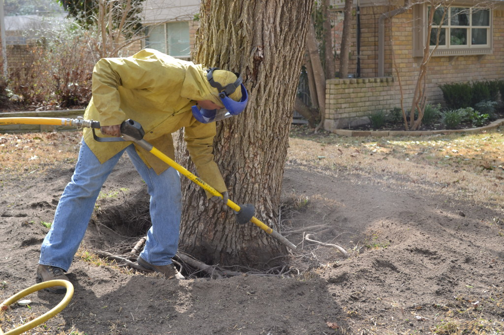 Air Spade Root Flare Excavation Abc Consulting