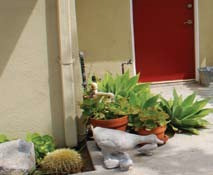 use plants and drought resistant vegetation